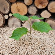biomass, renewable energy
